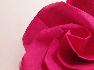 Fuschia Swirl Rose